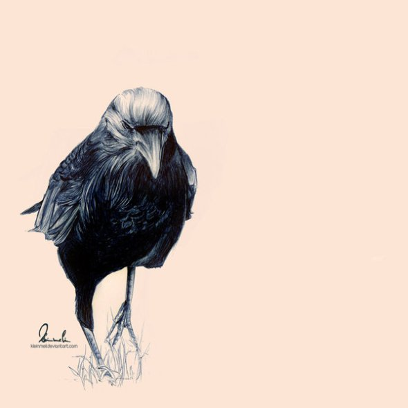 ballpoint_pen_crow_by_kleinmeli-d4zr9sd
